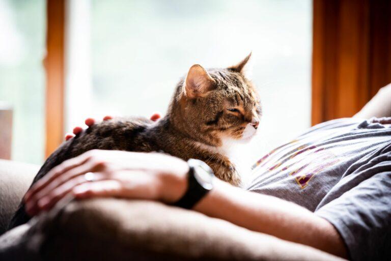 5 signes qui montrent que votre chat vous fait confiance