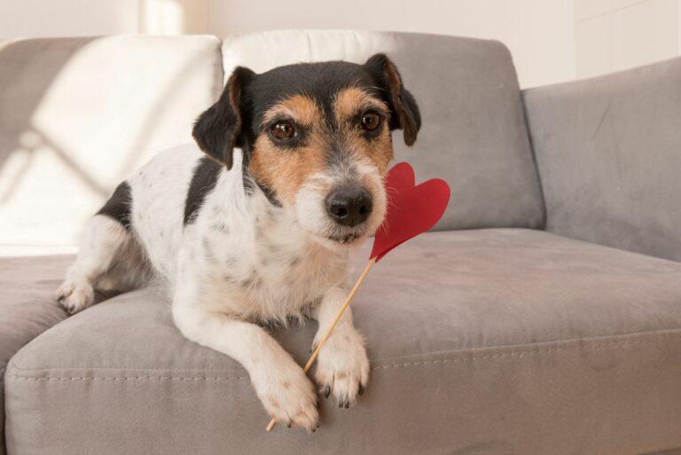 Saint-Valentin : idées de cadeaux pour chien