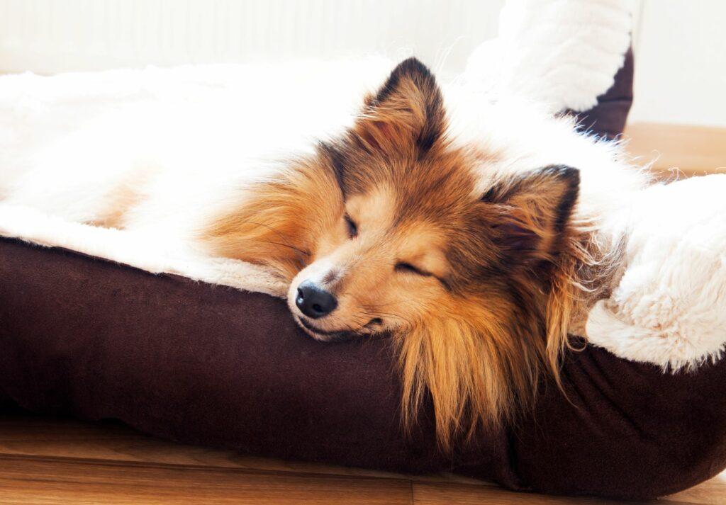 chien qui dort dans un panier