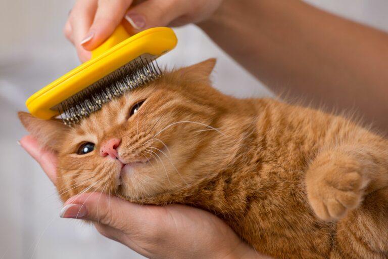 un chat roux se fait entretenir le pelage à l'aide d'une brosse