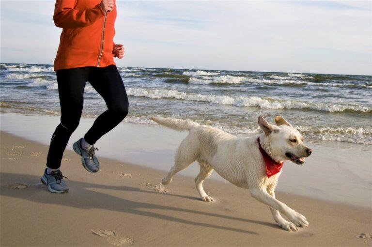 comment courir avec son chien