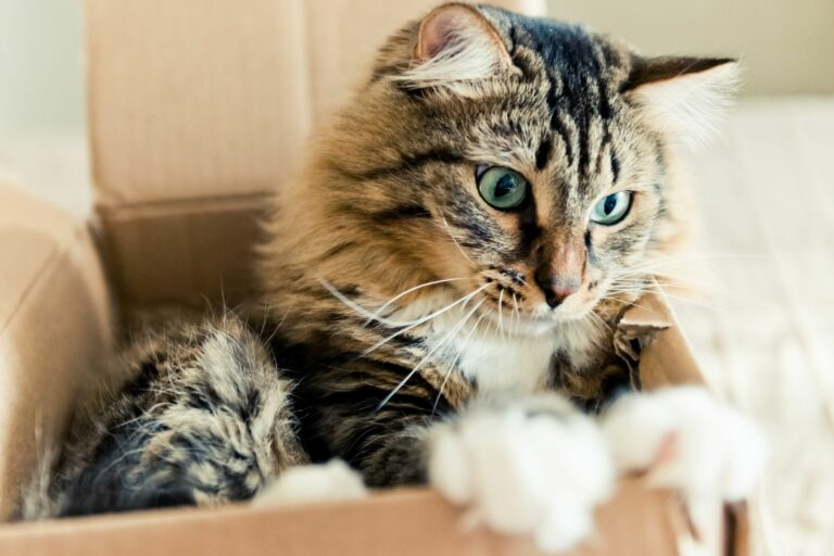 les chats adorent les cartons