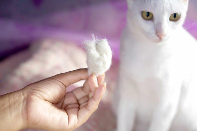 la perte de poils chez le chat