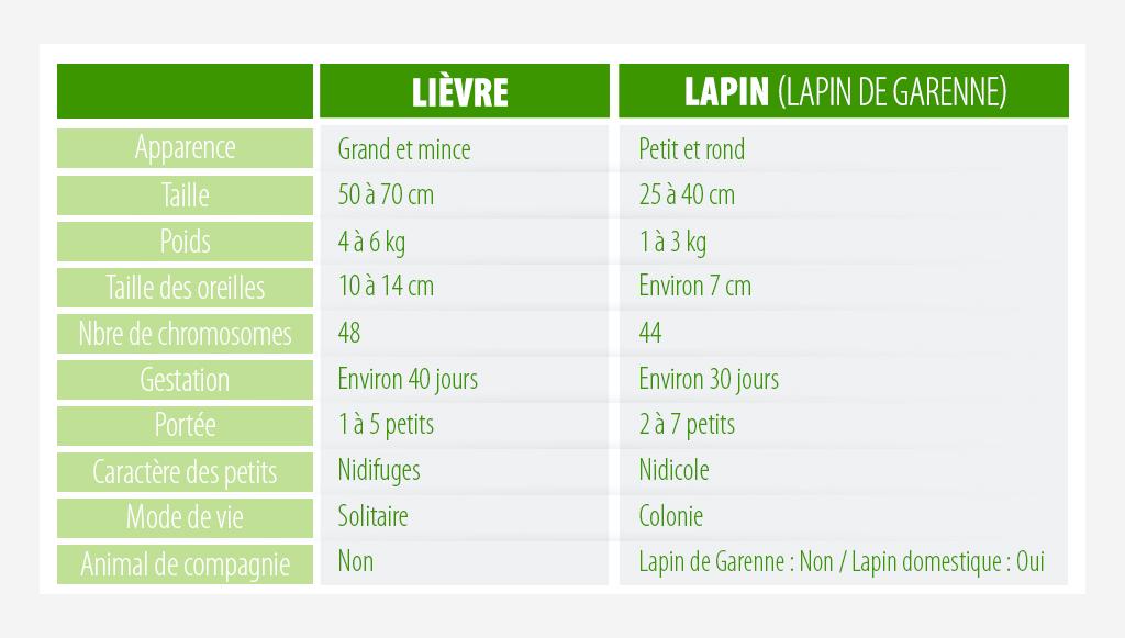 lièvre vs lapin