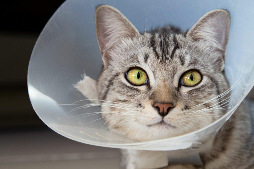 une assurance pour chat rembourse certains frais vétérinaires