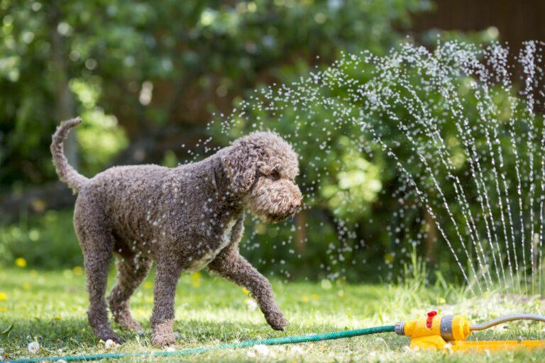 chien qui joue avec de l'eau