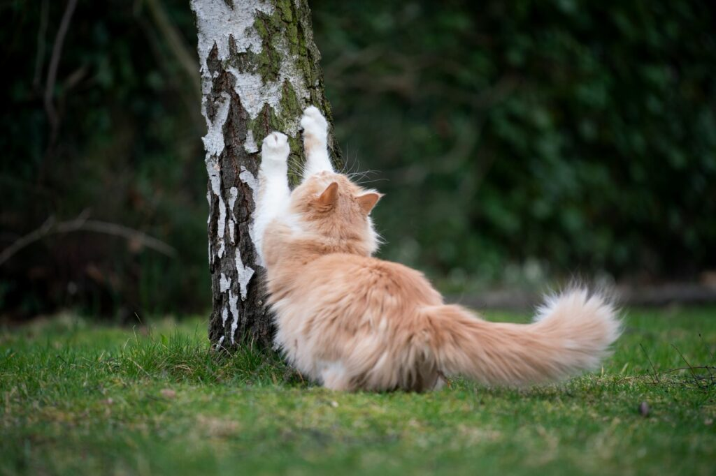 un chat roux se fait les griffes sur un tronc d'arbre