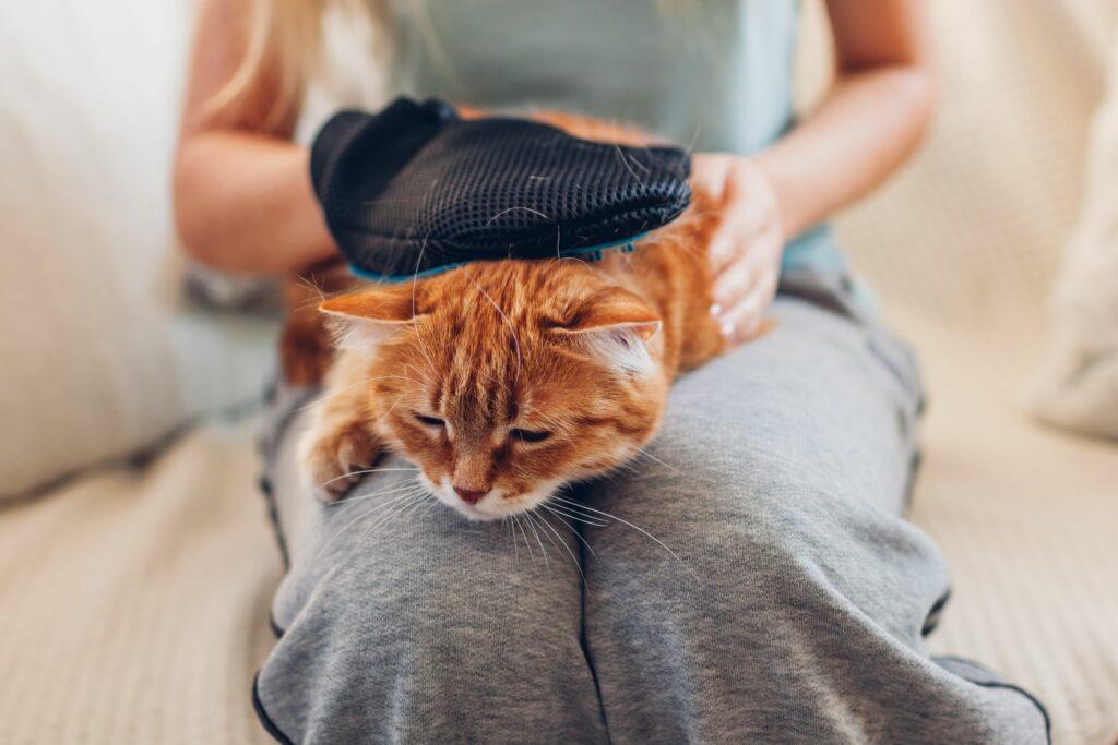 chat roux qui se fait brosser