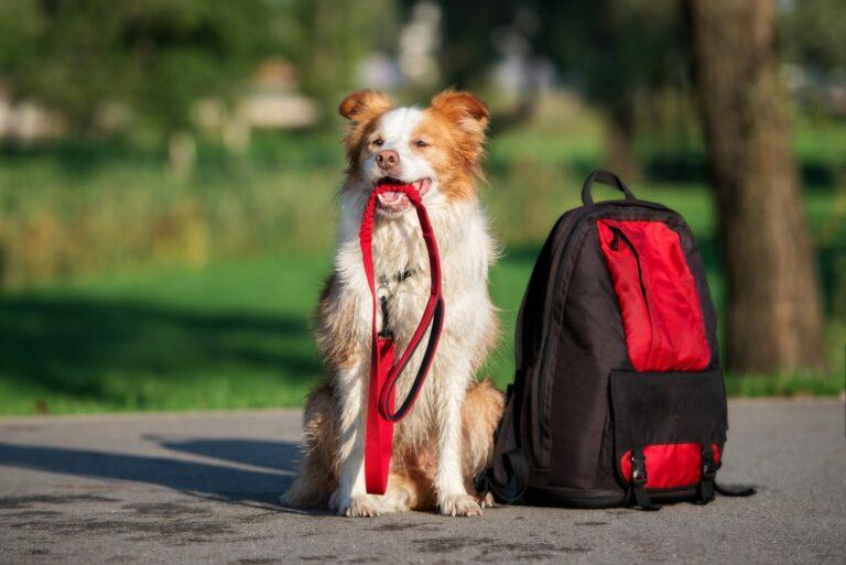 Un chien et des accessoires de randonnée