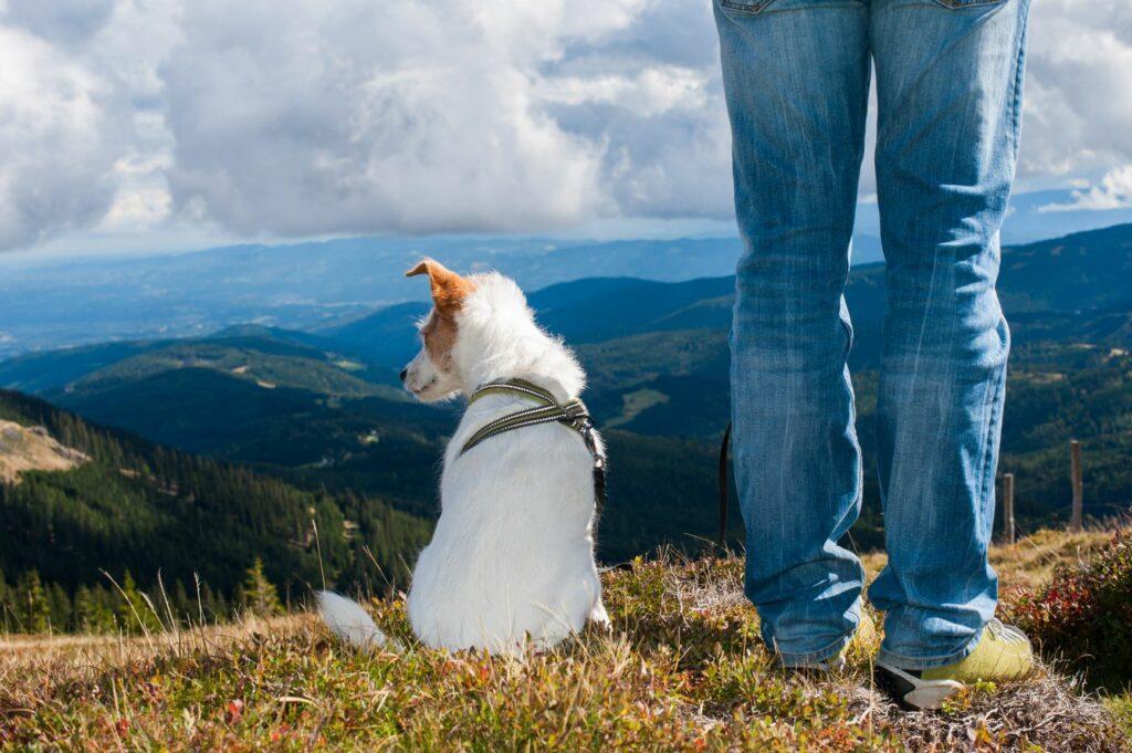 Un chien en randonnée à la montagne