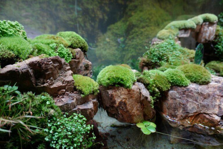 Paludarium : aquarium et terrarium combinés