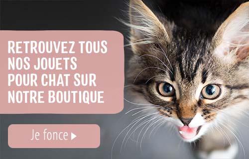 chat_nuit_miaule_octobre
