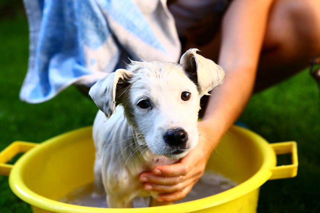 bain d'un chiot dans une bassine